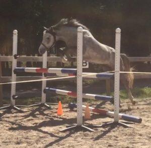 Pegasus Pan